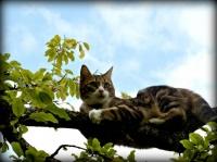 conny sur sa branche