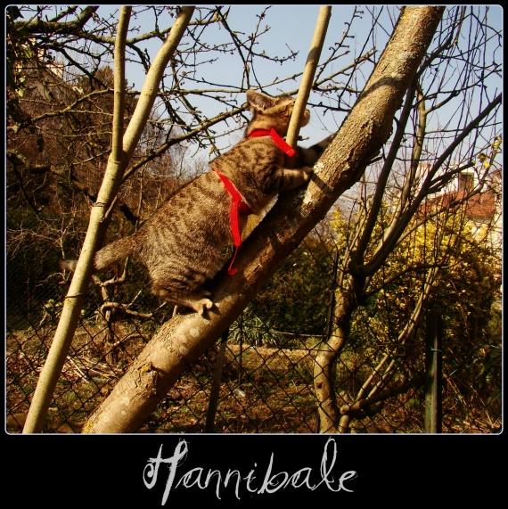 Hannibale 2 - Lolypage