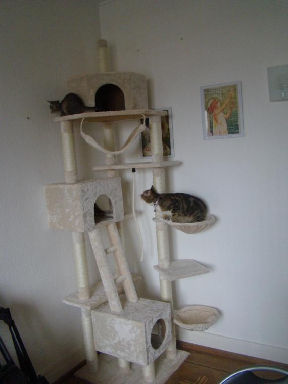 arbre à chat loly : les débuts