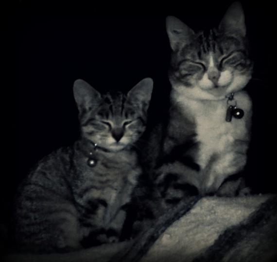conny et hannibale 2011 vieille photo
