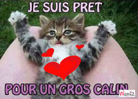 le-calin-du-matin-chat