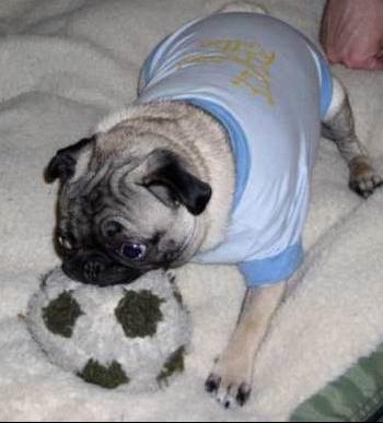 chien_soccer
