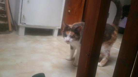 Chipie 2