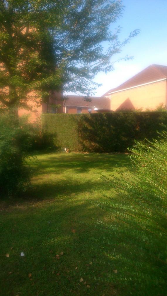 Chat dans espace vert