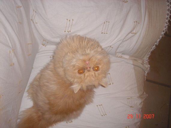mon chat Charly la tête à l'envers
