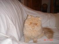 encore mon chat mais serieux cette fois