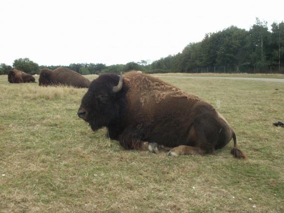 bison fut vacances d 39 t la baule mimi104 photos club doctissimo. Black Bedroom Furniture Sets. Home Design Ideas