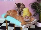 chat-massageB