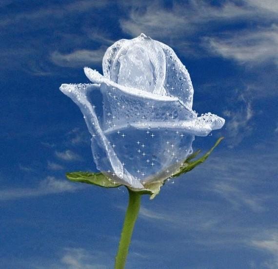 Cette rose pour toi Maman dans ton Paradis Blanc