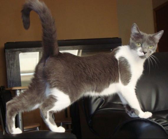 chat qui fait pipi a coté de la litiére - chats - forum animaux