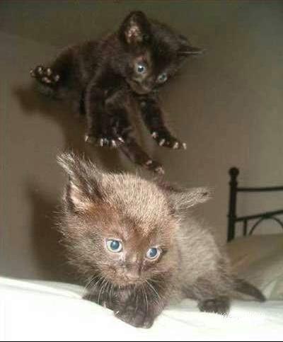 Jump_Attack_Ninja_Kitten