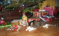 noel 2011 008