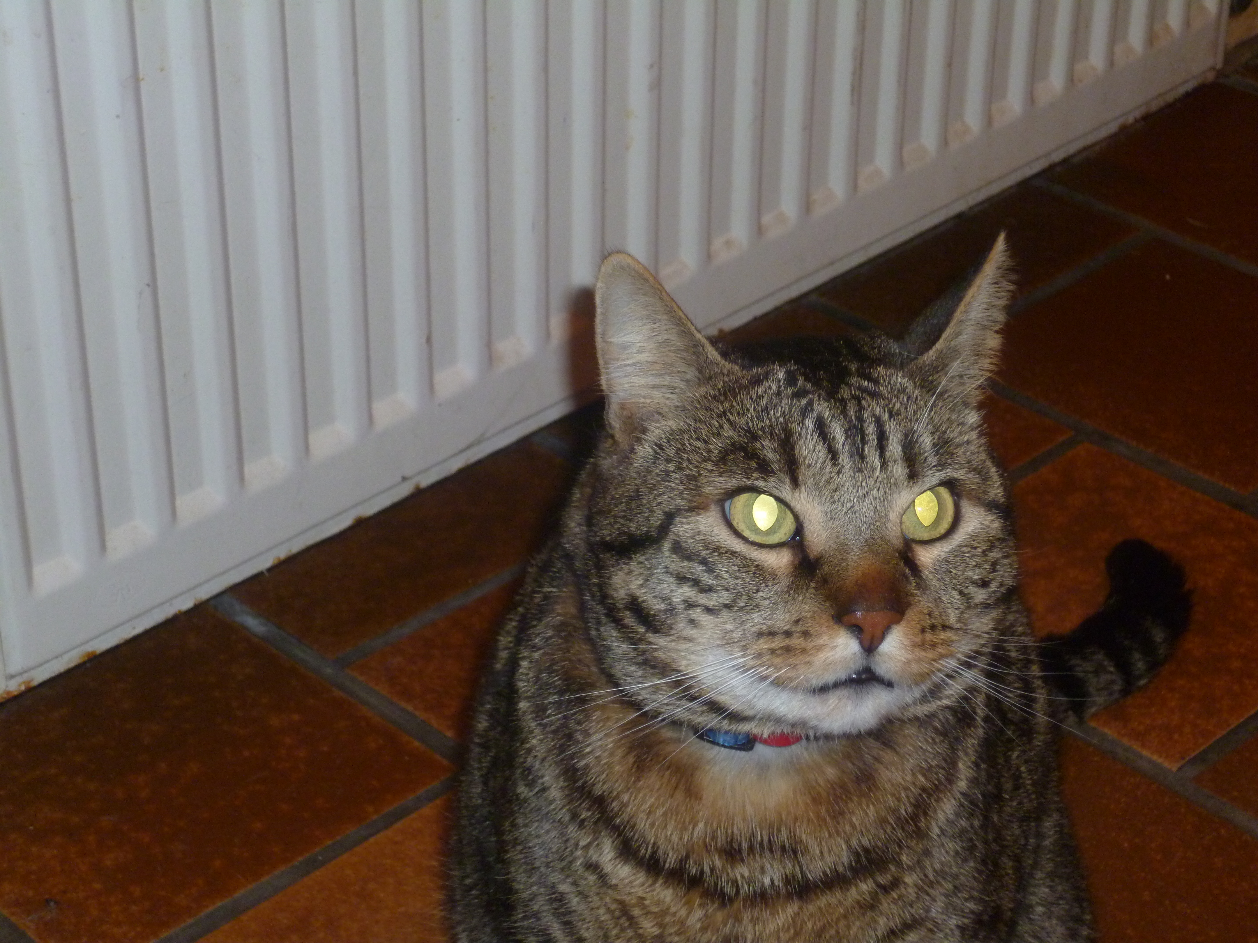 Radiquer les puces dans une maison lu0027image en grand comment tuer les puces dans la - Comment eliminer les puces d un chat ...