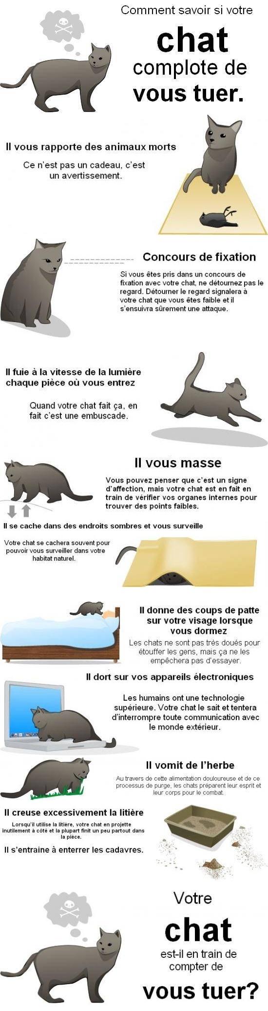 Verifier si votre chat projette de vous tuer