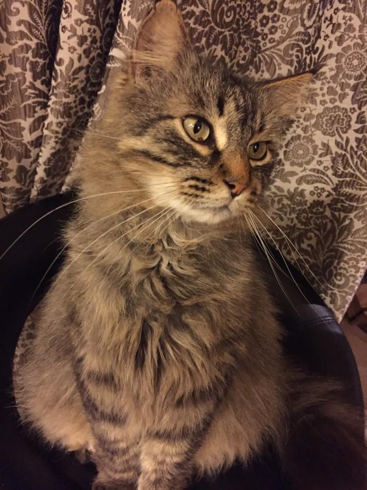 Sympt mes de maximus la sant de votre chat chats forum animaux - Mon chat fait pipi dans mon lit ...