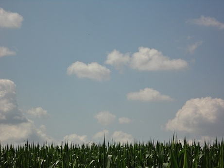 Champs de maïs sur champs de nuages