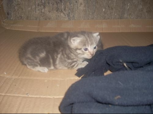 Photos chatons 002