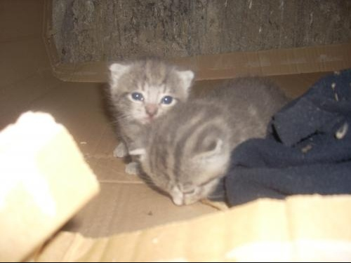 Photos chatons 011