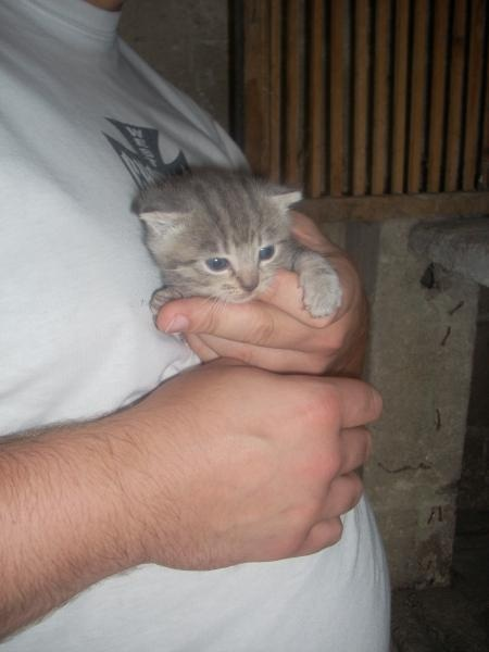 Photos chatons 010