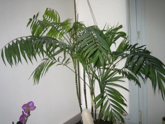 help besoin d 39 aide pour ma plante verte jardinage forum vie pratique. Black Bedroom Furniture Sets. Home Design Ideas