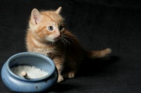 chatons-430753