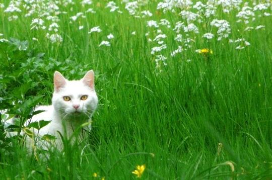 green-grass-cat-486558