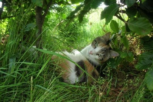 pose-feline-jardin-486306