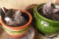 pots-fleurs-315857