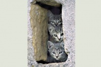 trois-petits-chats-315756