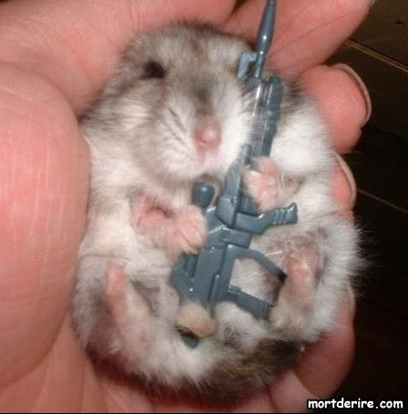 hamster-arme