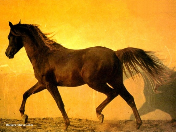 real_8673-cheval-sur-fond-orange