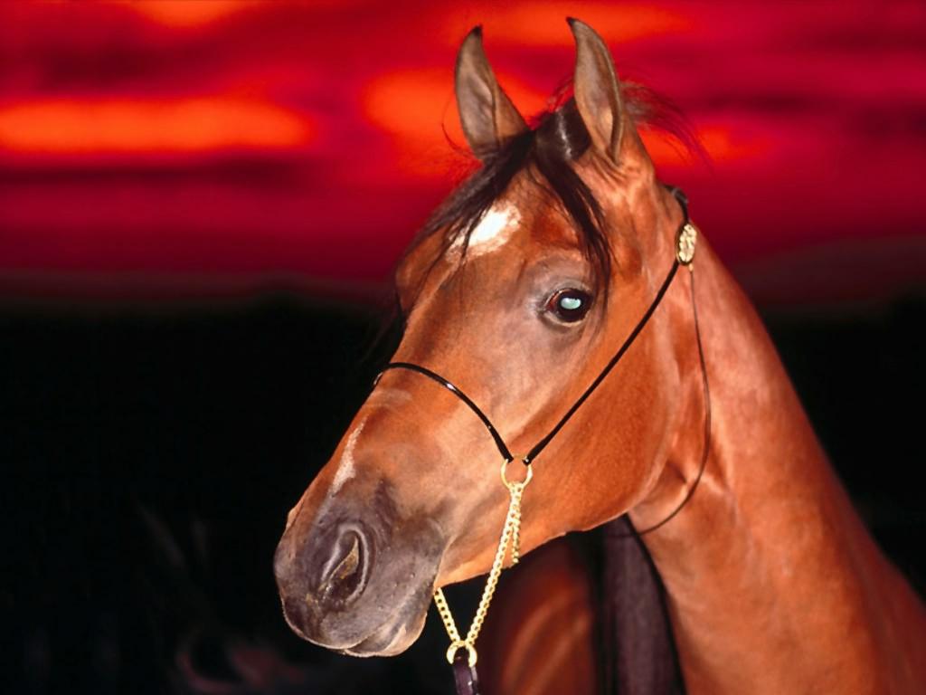 Cheval Tete tete-cheval - les chevaux - fefe19 - photos - club doctissimo