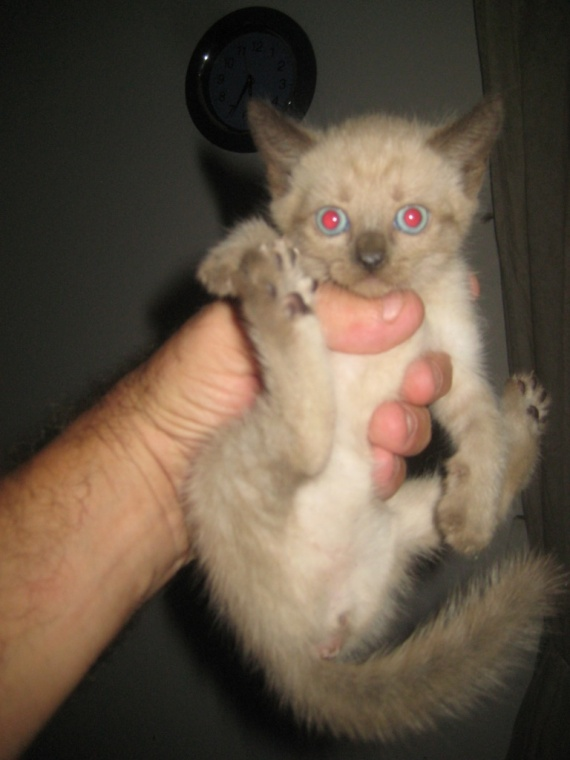 chatons 1