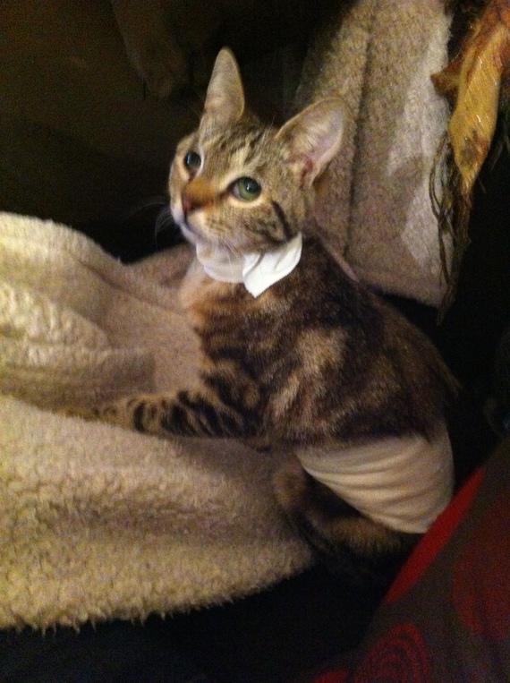 chats-bandage-1-img