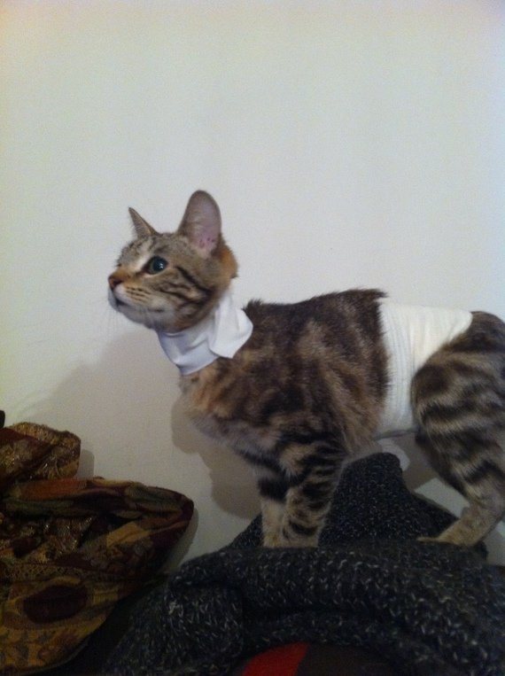 chats-bandage-2-img