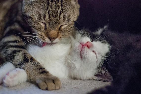 chats-chatons-6-img