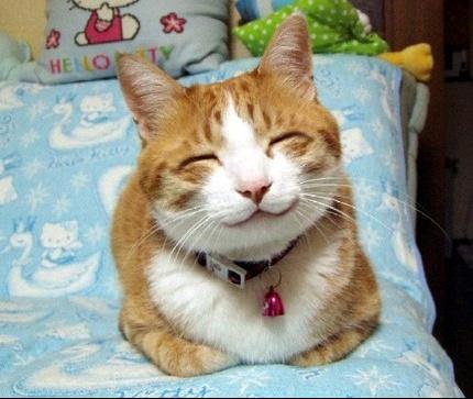 chat-heureux
