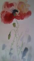 Coquelicot aquarelle 31906889_10156307882564719_4839391706853933056_n