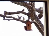 Une envolée d'oiseaux dans le catalpa