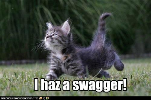 Swagger cat