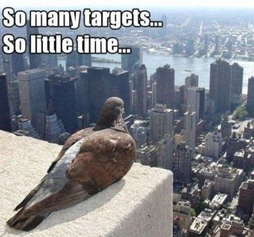 pics-many-targets-little-img