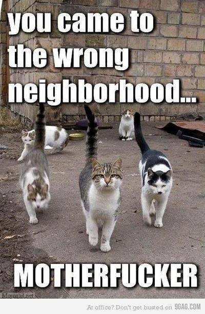 pics-wrong-neighborhood-img