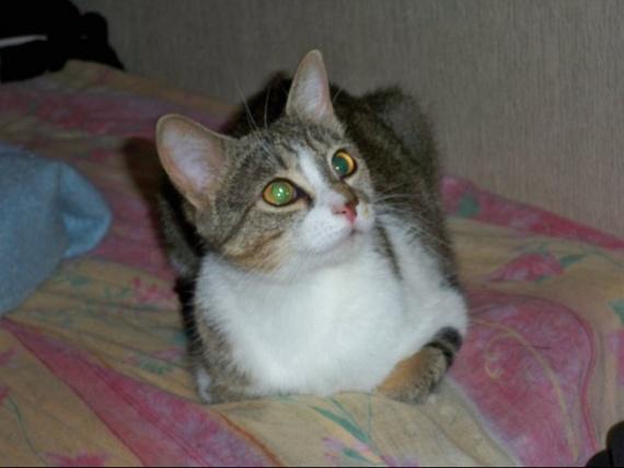 Neige née en Avril 2009