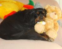 Clovis et ses jouets