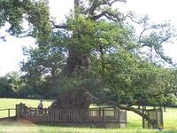 broceliande-arbre