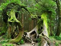 L'arbre des légendes Bretagne