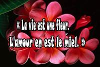 Citation-Amour-Vie-amoureuse-67