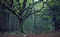 Forêt-de-Brocéliande1