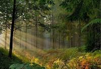 foret-paysage-en-Broceliande-