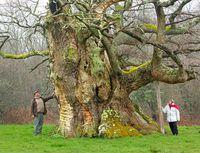 plus-bel-arbre-de-l-annee-decouvrez-les-gagnants-2013-et-participez-au-concours-2014